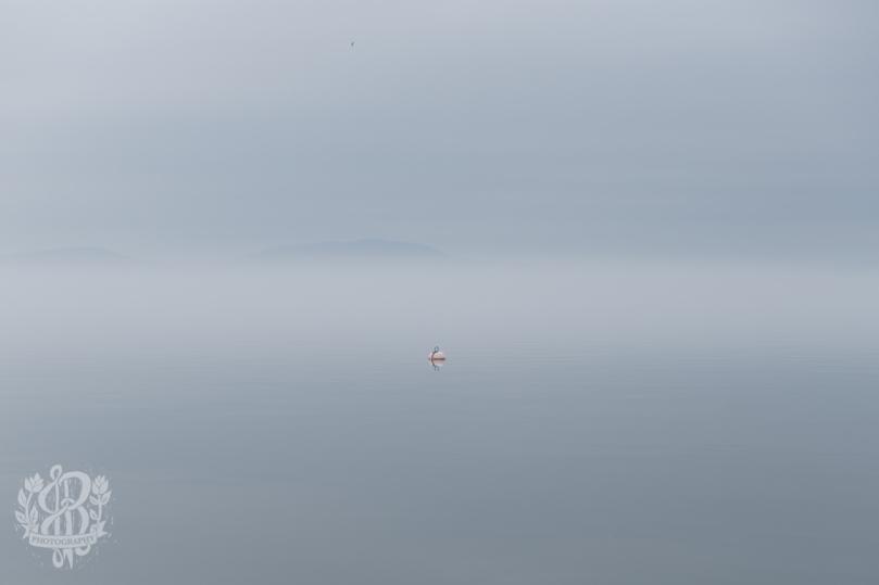 Essex_Fog-5532